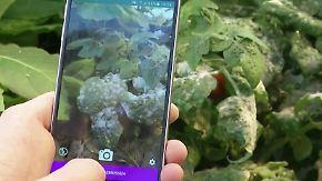 Reduktion von Pestiziden: App soll kranken Pflanzen helfen