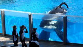 "Traurige Berühmtheit: ""Sea World""-Orca Tilikum gestorben"