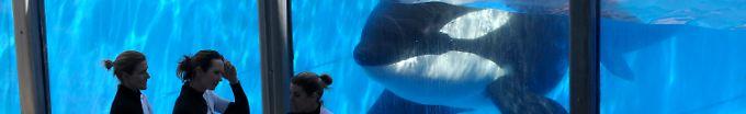 Der Börsen-Tag: 09:44 Anleger getäuscht - Seaworld muss Millionen zahlen