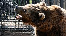 """Der """"russische Bär"""" ist wieder erstarkt."""