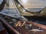 Inzwischen warm genug: Austern und Anchovis zieht es in die Nordsee