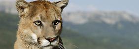 Gefährdete Arten betroffen: Trumps Mauer wird auch Tiere trennen
