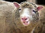 Dolly wurde am 5. Juli 1996 geboren, doch erst im folgenden Jahr erfuhr die Öffentlichkeit davon.