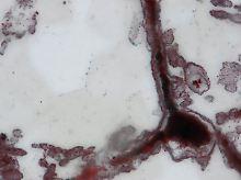 Fundsache, Nr. 1345: Forscher entdecken älteste Mikrofossilien