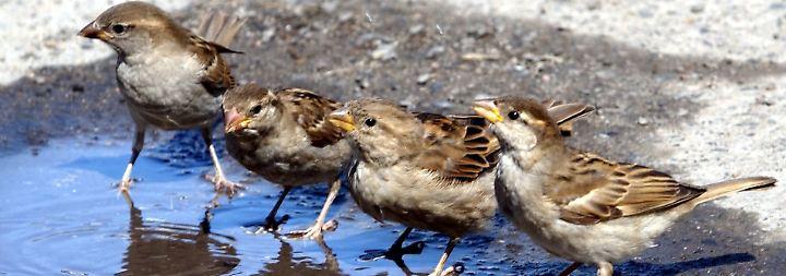 Die frühen Vögel.
