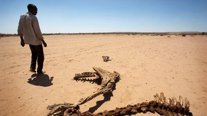 Trockenheit in Somaliland, einem faktisch unabhängigen Teil von Somalia.