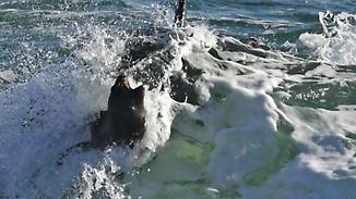 Brutales Naturschauspiel in Patagonien: Killerwale fallen am Strand über Robben her
