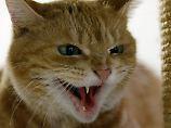 Schmuseeinheit schlägt Fressnapf: Katzen lieben Menschen doch