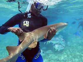 Taucher mit Ammenhai am Belize Barrier Reef.