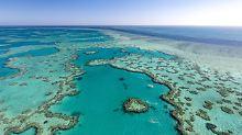 Sterben am Great Barrier Reef: Korallenbleiche schadet auch dem Tourismus