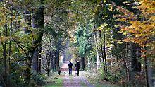 Spaziergang durch einen Wald bei Köln.