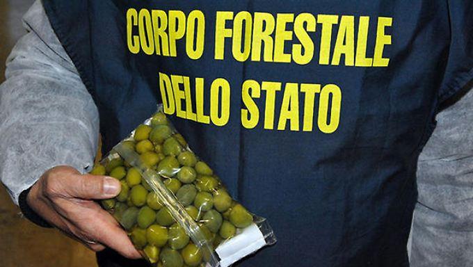 Bereits im März 2016 konfiszierte Europol eine Rekord-Menge gefälschter Lebensmittel. Dabei waren unter anderem auch 85 Tonnen Oliven, die mit einer Kupfer-Sulfat-Lösung gefärbt waren.