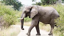 Viele Touristen kommen, um die Elefanten zu sehen. Manche kommen, um sie zu töten.