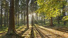 Gebrauchsanweisung für den Wald: Wohlleben teilt sein Waldwissen