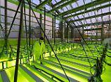 """""""Baumwolle vergiftet die Welt"""": Algen - die Zukunft der Textilbranche?"""