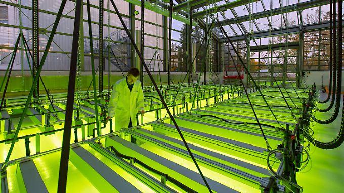 Suche nach Alternativen: Die Textilbranche experimentiert mit Algen und anderen kompostierbaren Stoffen.