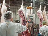"""Gesetz soll Arbeiter schützen: """"Maximale Ausbeutung"""" auf Schlachthöfen"""