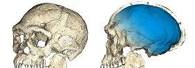 300.000 Jahre alte Knochen: Homo sapiens ist viel älter als gedacht