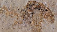 Fundsache, Nr. 1353: Ältestes Pilz-Fossil ist 115 Millionen Jahre alt