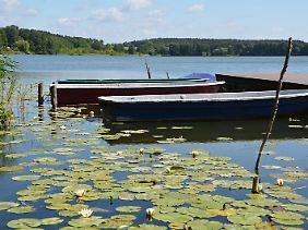 Die Uckermark ist voller Seen, deren Ufer nicht überlaufen sind - zum Beispiel der Oberpfuhlsee.