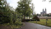 Baum stürzt auf Tigergehege: Zoo Magdeburg beklagt Sturmschäden