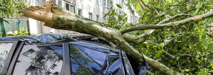 9000 Euro Schaden: Wenn der Ast aufs Auto kracht