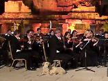 Streuner trottet auf Bühne: Hund platzt mitten in ein Konzert hinein