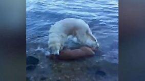Heldenhafter Sprung ins Nass: Hund rettet Rehkitz vor dem Ertrinken