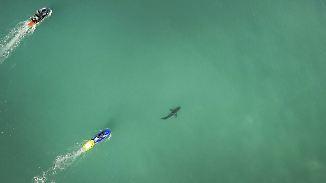 Déjà-vu vor Südafrikas Küste: Surf-Star Fanning entgeht knapp erneuter Hai-Attacke