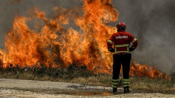 Erst im Juni wüteten schwere Waldbrände in Portugal.