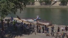 Ungewöhnliche Kunstaktion: Pottwal strandet am Seine-Ufer mitten in Paris