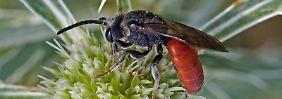 Braucht kein Mensch - oder?: Insektensterben geht still vor sich