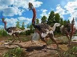 Biegsamer Helm?: Kurioser Dinosaurier ähnelt heutigem Vogel
