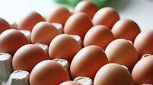 Ministerium warnt vor Verzehr: Millionen Eier sind mit Insektizid belastet