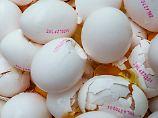 Die niederländischen Behörden lassen Millionen Eier von betroffenen Höfen vernichten.