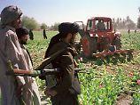 Opium als Exportschlager: Taliban drängen in den Drogenhandel