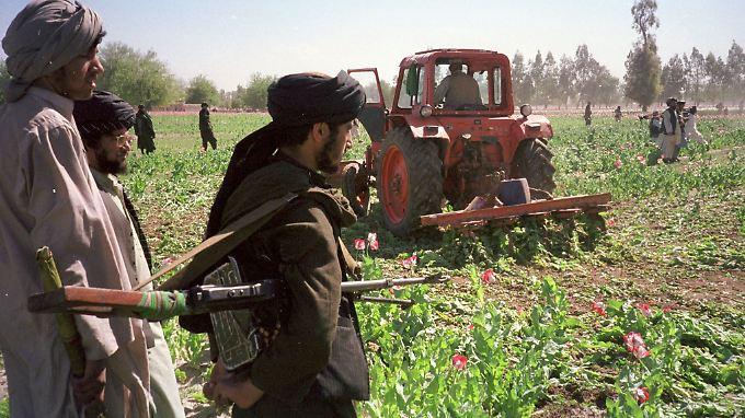 Afghanistans Islamisten profitieren zunehmend von der Opium- und Heroinproduktion.