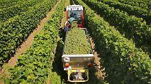 Das Geschäft mit Wein: So kämpfen Winzer ums Überleben