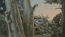 This is a Maiopatagium in Jurassic forest in crepuscular (dawn and dusk) light: A mother with a baby in suspending roosting posture, climbing on tree trunk, and in gliding