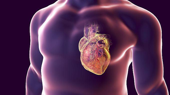 Das Herz pumpt bis zu 10.000 Liter Blut am Tag durch den Körper eines Menschen.