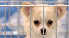 Einsatz in Tschechien: 200 Hunde aus verwahrlostem Haus befreit