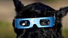 Verunsicherungen in der Fauna: Wie Tiere auf eine Sonnenfinsternis reagieren