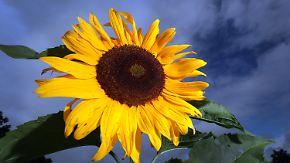 Gewitterschauer im Norden: Sommer zieht sich in den Süden zurück