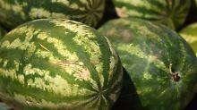 Frage & Antwort, Nr. 498: Kann man hören, ob eine Melone süß ist?