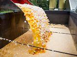 Zerstörung von mit Fipronil verseuchten Eiern in den Niederlanden.