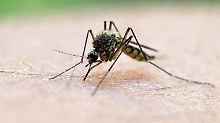 Draußen ist es zu kalt: Stechmücken zieht es nun in Häuser
