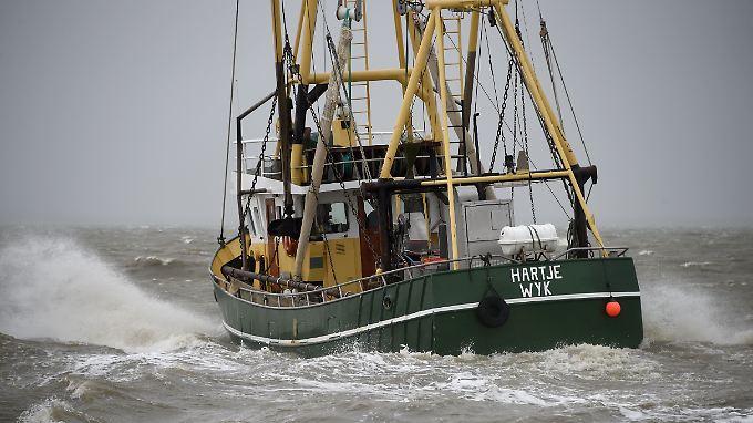 Ein Fischkutter in der Nordsee. Der Kabeljau verträgt das wärmere Wasser nicht gut.