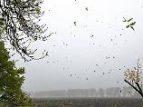 """""""Recht früh im Jahr"""": Der erste Herbststurm naht"""