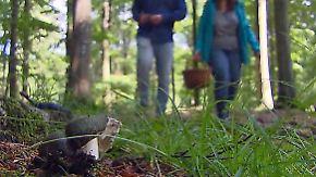 n-tv Ratgeber: Hauptsaison für Pilz-Sucher startet
