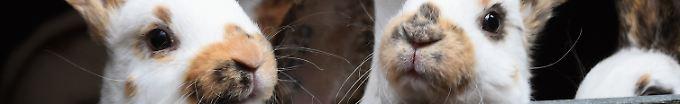 Der Tag: 20:20 38 tote Kaninchen mit abgeschnittenen Ohren entdeckt